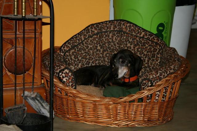 kanapé angolul ~ menhelyi és talált kutyákcicák